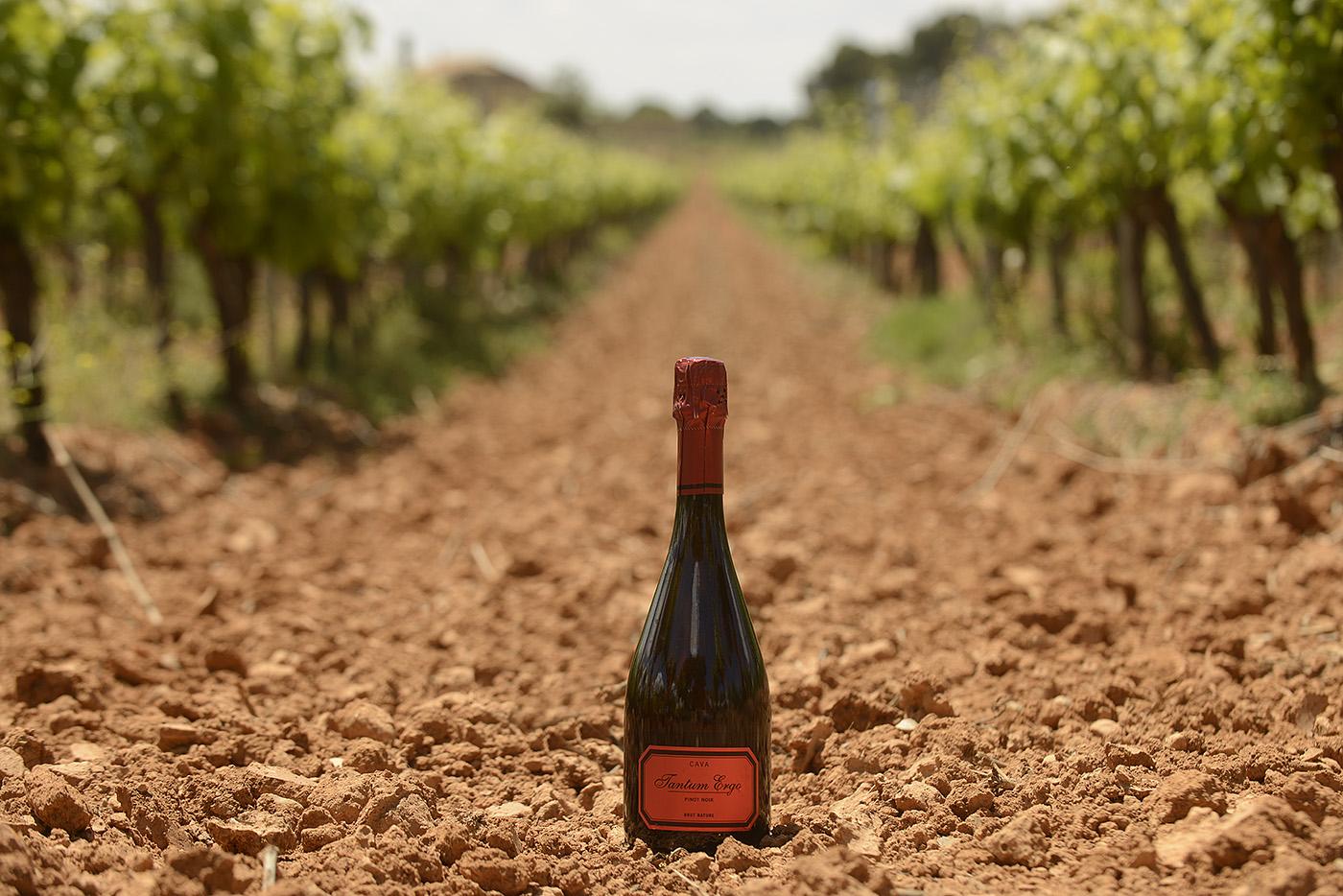 Tantum Ergo, de nuevo Mejor Cava Rosé de España para Peñín