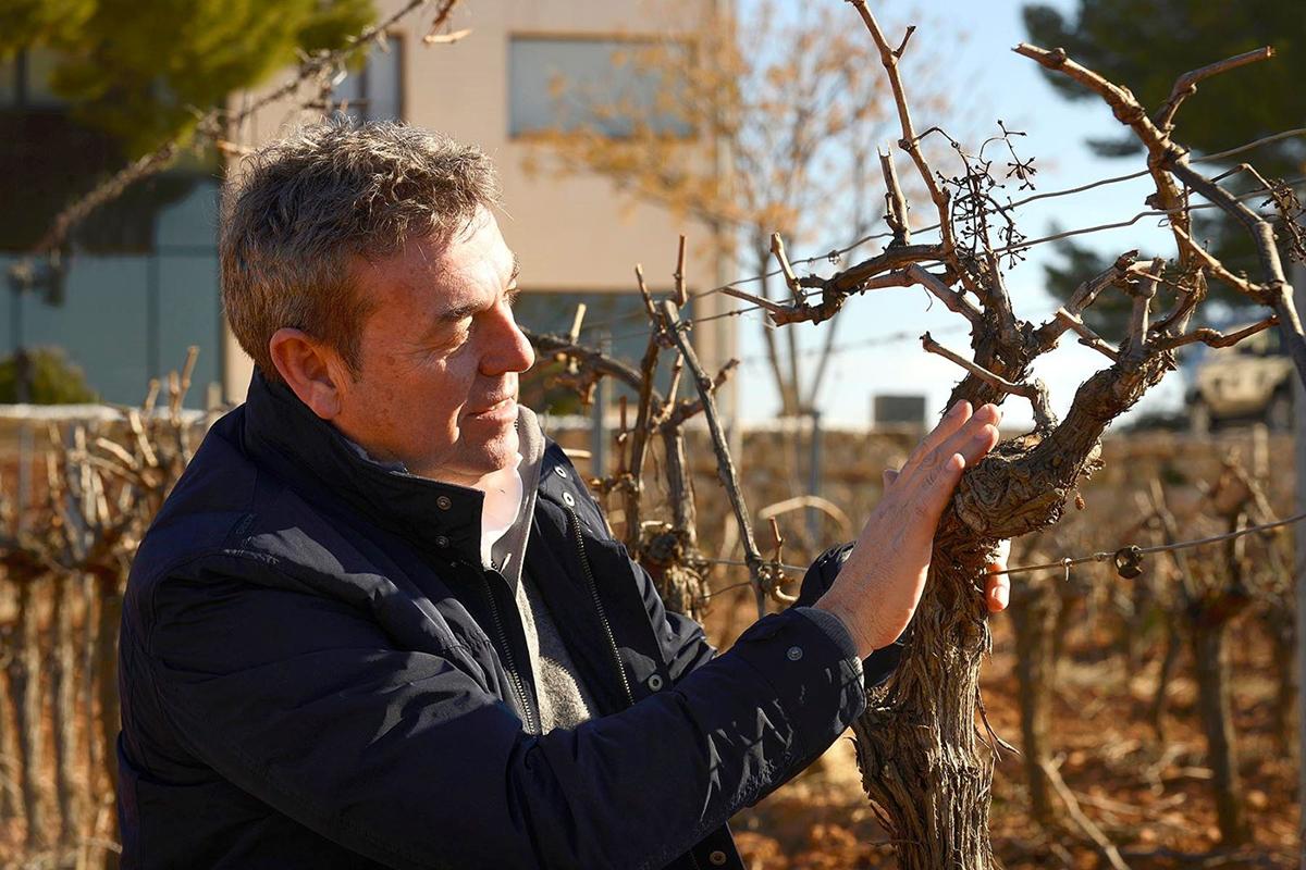 Rafa Navarro: Reflexiones de un viticultor de lujo